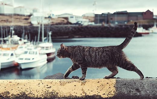 Tabby cat on ledge Jigsaw