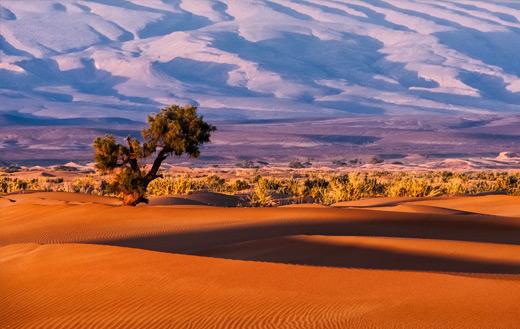 Tree in a desert jigsaw