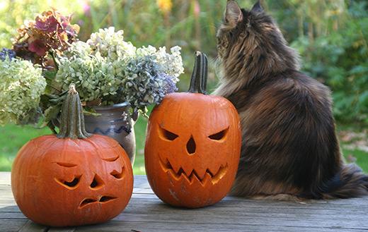 halloween cat jigsaw puzzle