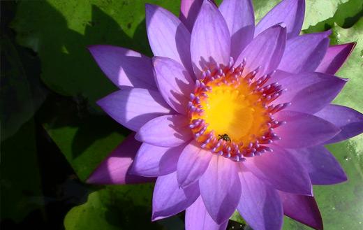 purple flower jigsaw puzzle