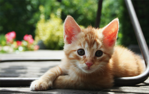 Red Kitten Puzzle