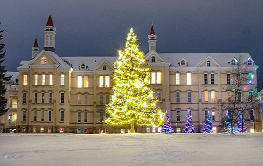 Lighted-trees-at-Michigan-State-Hospital