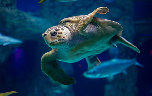Turtle-sealife