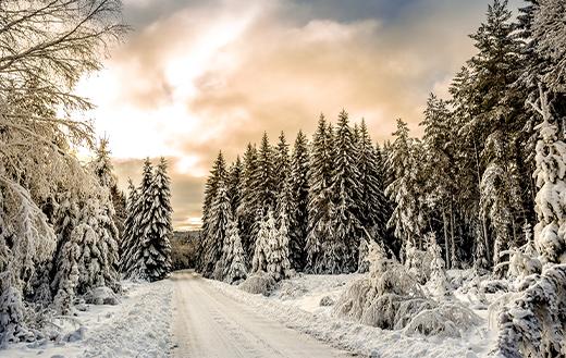 road-in-between-trees
