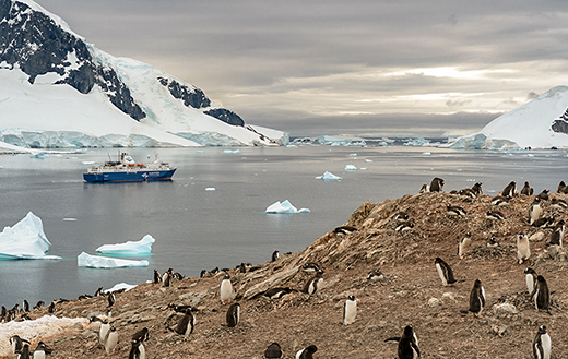 penguins-at-Antartica