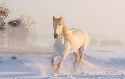 white-horse-in-snow