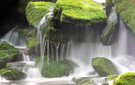 moss-brook-water
