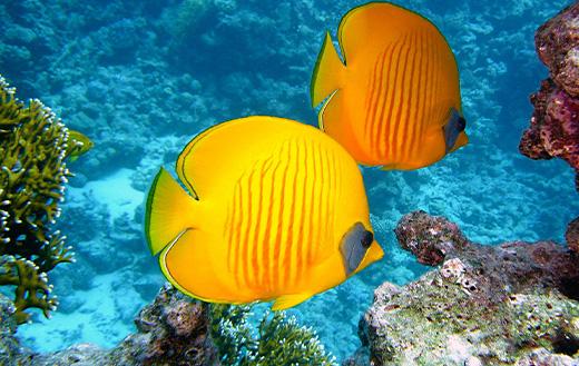 Exotic yellow fish