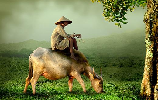 Man asia vietnam