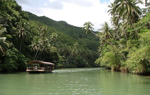 Rainforest Bohol Philippines