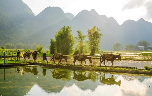 farmers-in-rice-field