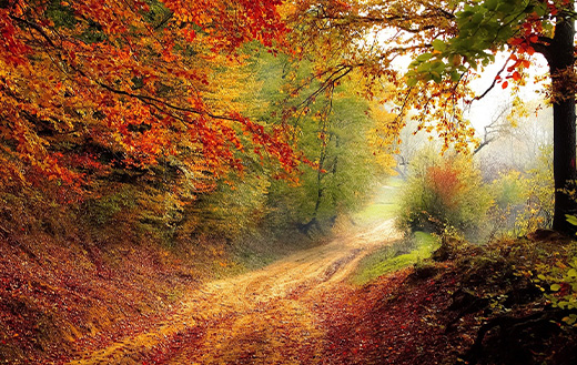 Forest road in autumn