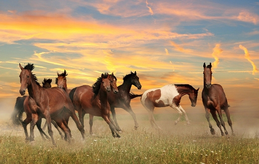 Landscape horses sky
