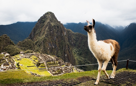 Llamas of Machu Picchu puzzle