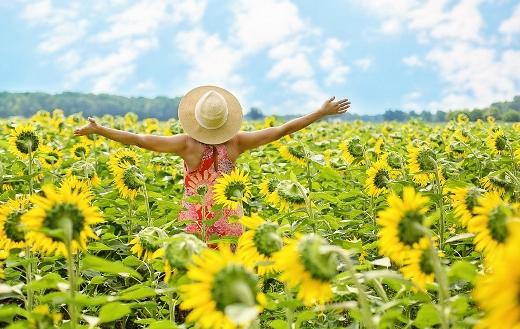 Sunflowers field woman