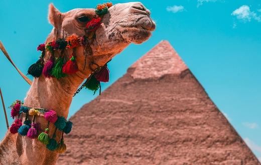 Brown camel ride Cairo
