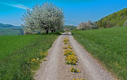 hiking trail in the spring puzzle