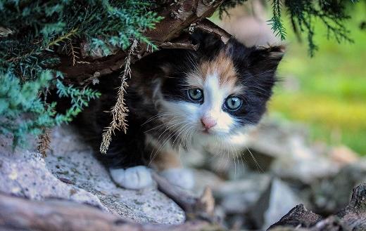 Kitty cat jigsaw