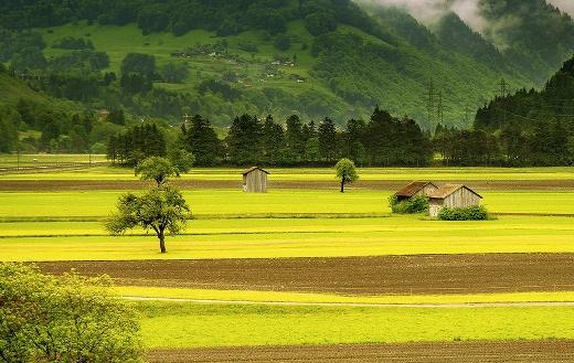 Landscape meadow field