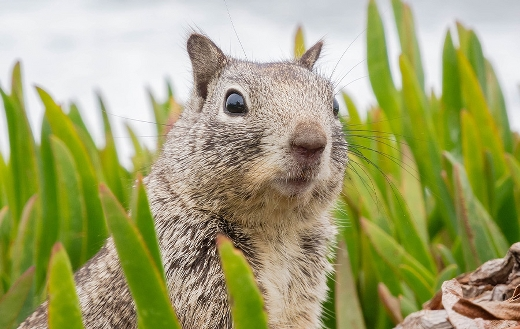 Surprised sweet animal squirrel California
