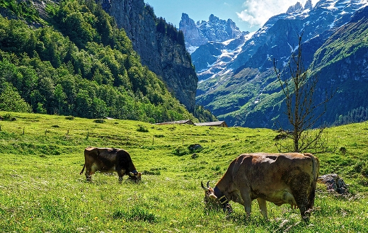 Alpine mountain nature landscape Switzerland