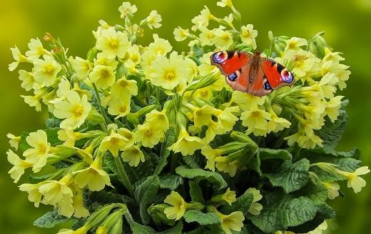Butterfly nature garden flowers