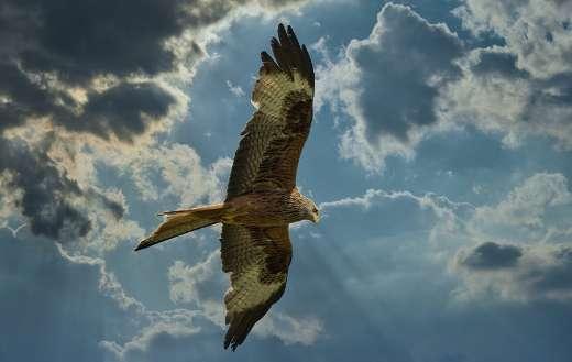 Dramatic clouds hunter bird