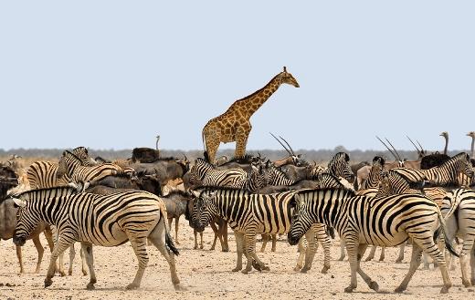 Dry nature Namibia Africa animals
