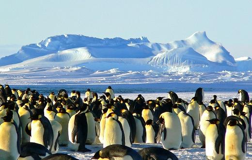 Emperor penguins Antarctic life online