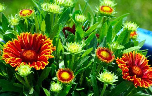 Flora blanket blossom flower puzzle