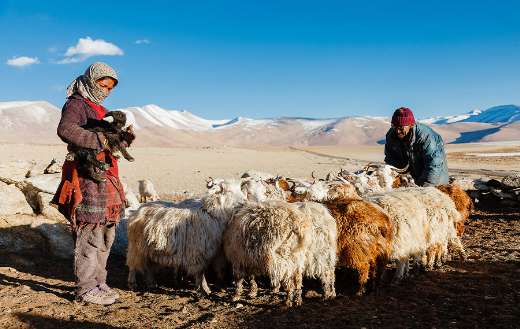 Himalayan people mountain hill animals