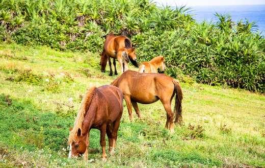 Landscape parent foal horse