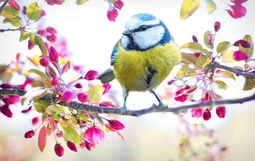 Spring bird tit tree branch puzzle