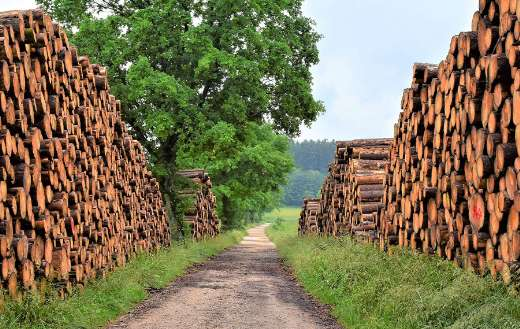 Timber industry tree trunks puzzle
