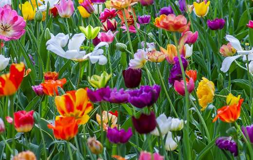 Assorted color flowers online