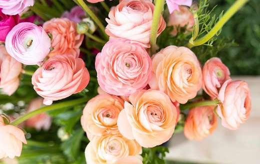 Close up pink roses