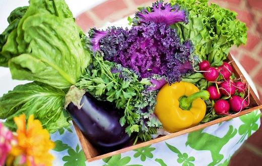 Harvest organic vegetables