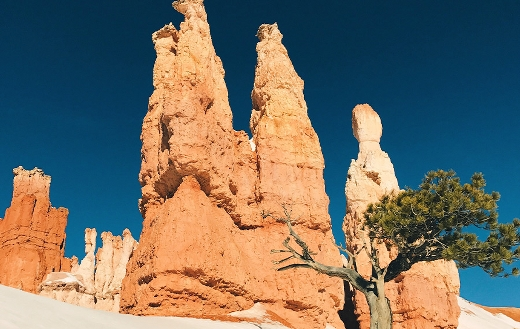 Low angle brown cliff tree Bryce Canyon national park