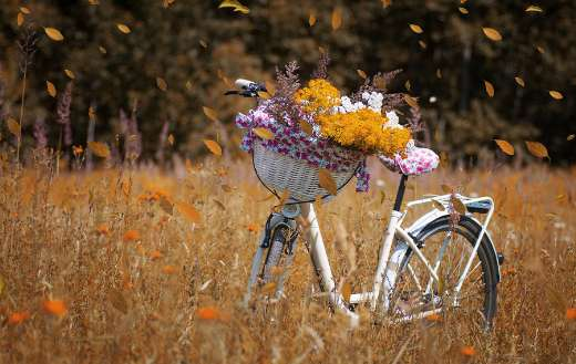 Nature flowers bike