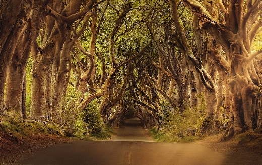 The dark hedges avenue trees