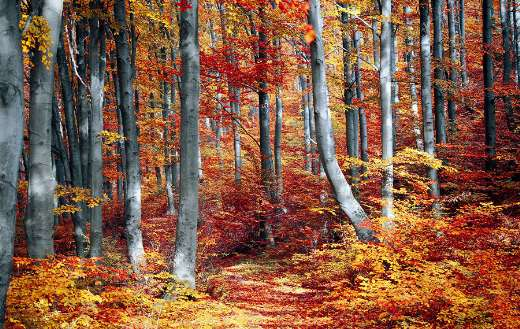 Autumn colorful season nature puzzle