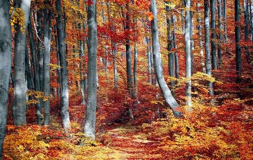 Autumn colorful season nature puzzle