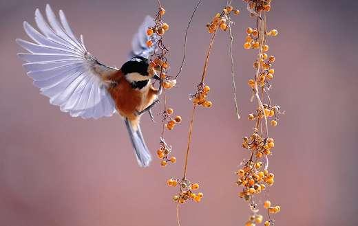 Bird wings fluttering nature animals berries