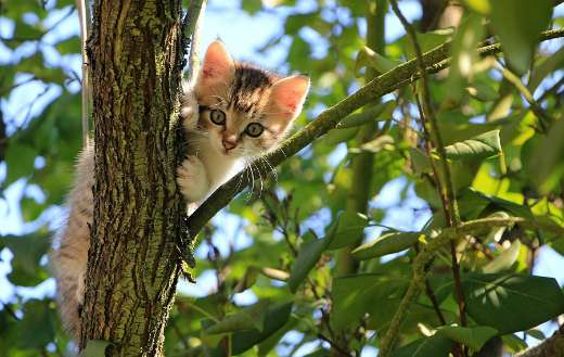 Domestic kitten in the tree
