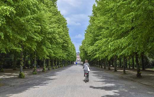 Green beautiful park nature landscape