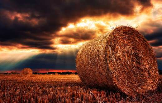 Hay bales straw bales harvest puzzle