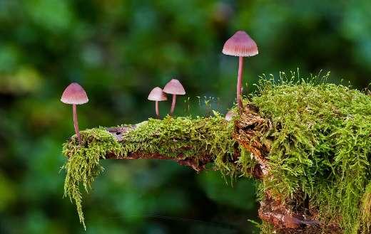 Mushroom moss sponge autumn
