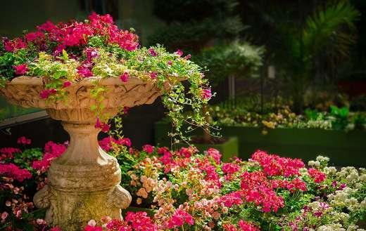Nature flowers garden