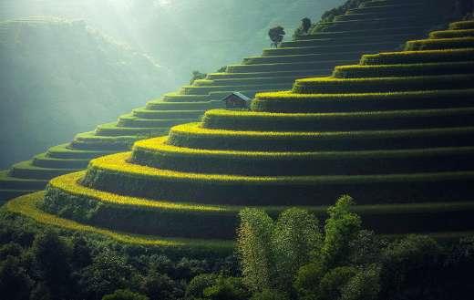 Rice plantation agriculture Thailand online