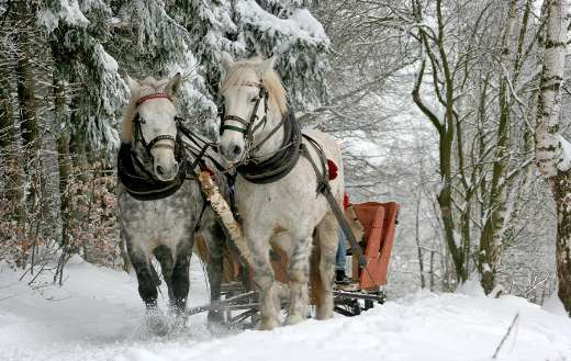 Sleigh ride horse winter forest